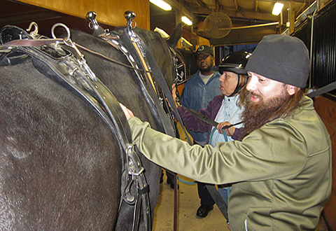 Army Veteran Mitchell Reno grooms a horse before riding at BraveHearts Therapeutic Riding & Educational Center in Harvard, Ill. (Photo by Jayna Legg)